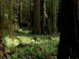 Прогулки с динозаврами: 2. Время титанов